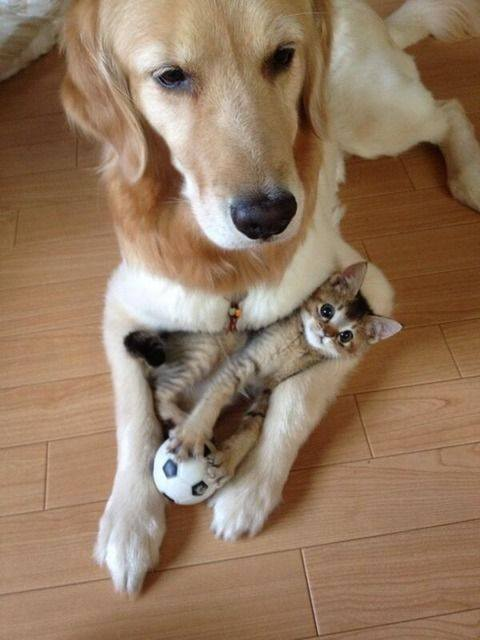 dog and kitten portrait