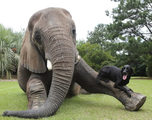 elephant and dog portrait